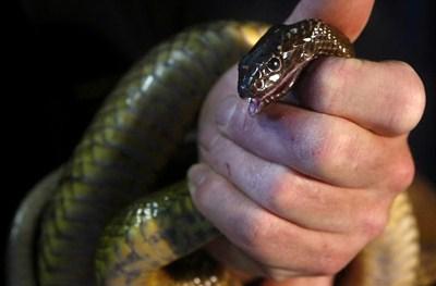 Les serpents les plus dangereux du monde 210