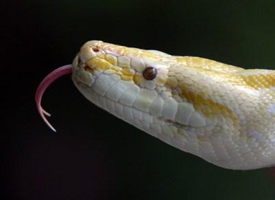Les serpents les plus dangereux du monde 2210