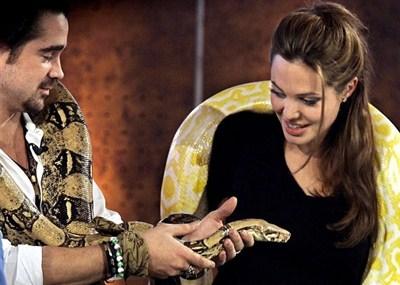 Les serpents les plus dangereux du monde 510