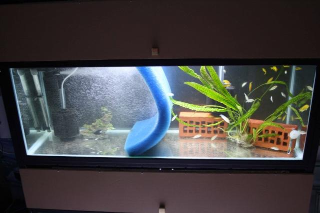 batterie d'aquarium Img_1115