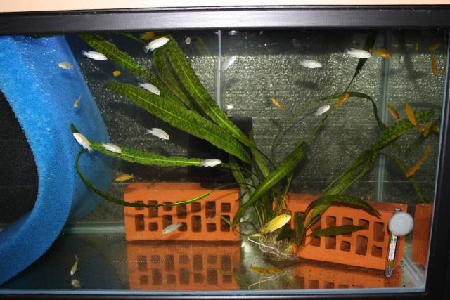 batterie d'aquarium Img_1116