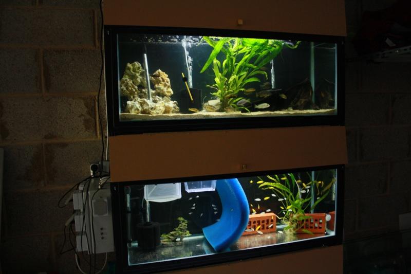 batterie d'aquarium - Page 2 Img_1411