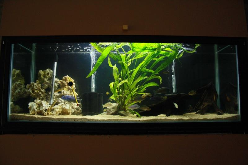 batterie d'aquarium - Page 2 Img_1412