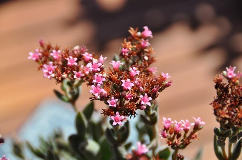 floraisons de chez Xata 00314