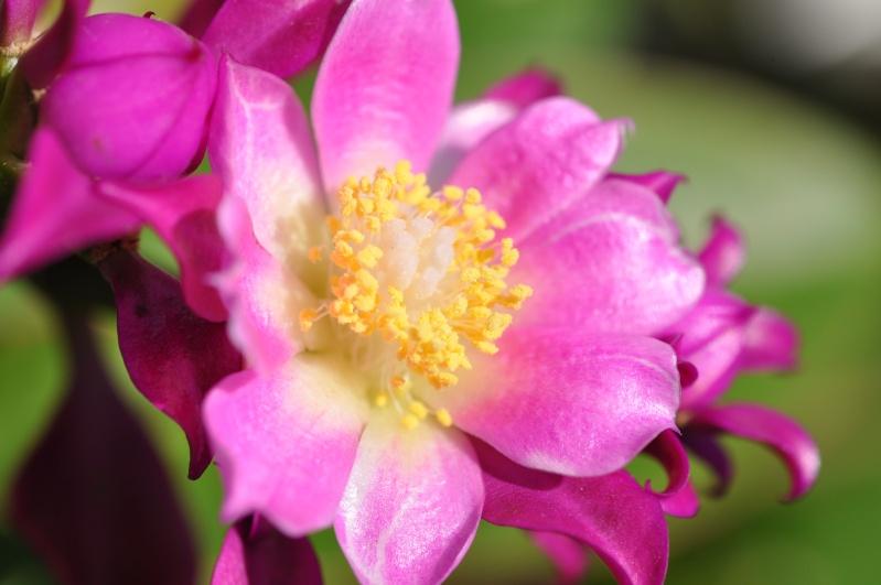 floraisons de chez Xata 00319