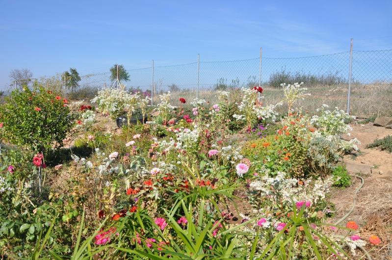 Al-Andalus (Andalousie - Algarve - Alentejo),  faune,  flore, paysages, maisons  et jardins fleuris - Page 2 00515