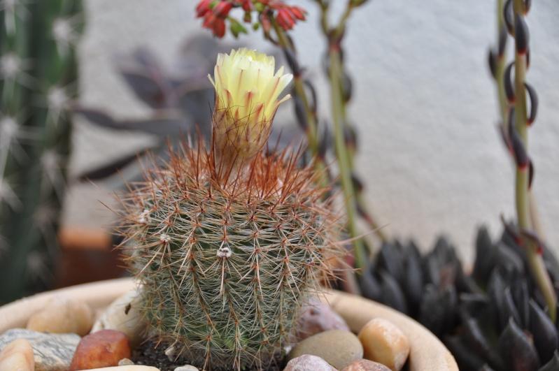 floraisons de chez Xata 00611