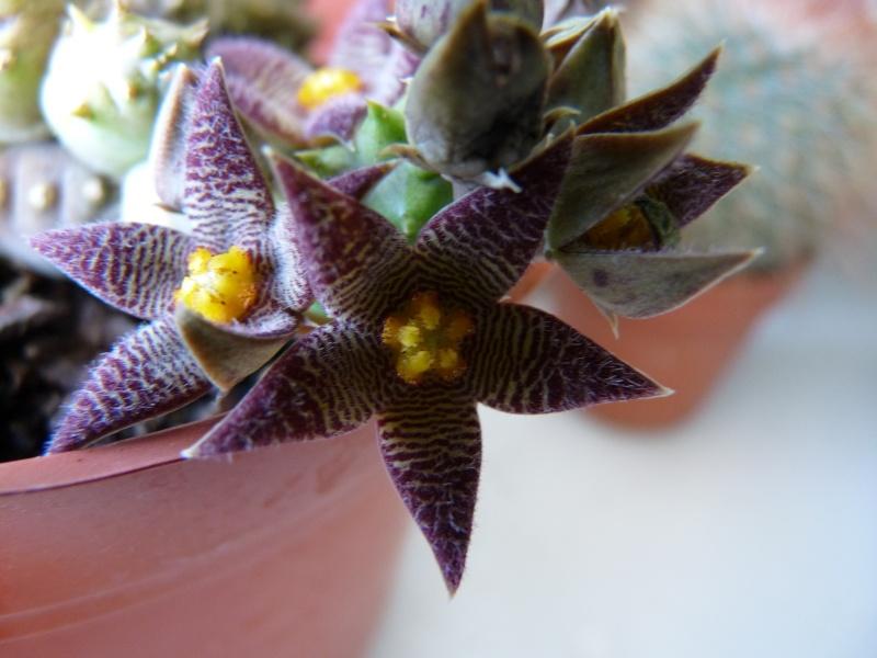 floraisons de chez Xata 00717