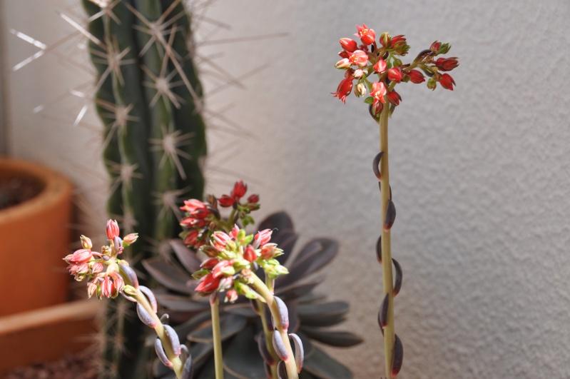 floraisons de chez Xata 00810