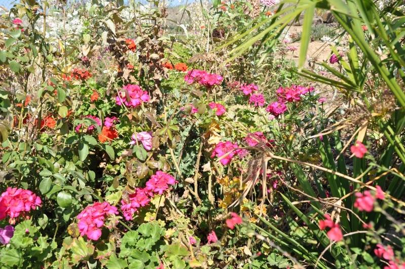 Al-Andalus (Andalousie - Algarve - Alentejo),  faune,  flore, paysages, maisons  et jardins fleuris - Page 2 00814
