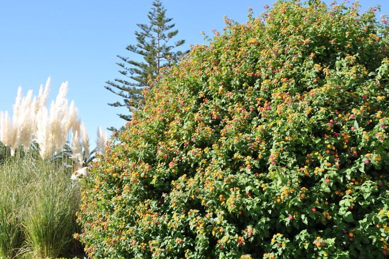 Al-Andalus (Andalousie - Algarve - Alentejo),  faune,  flore, paysages, maisons  et jardins fleuris - Page 2 00815