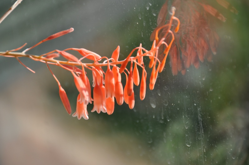 floraisons de chez Xata 00912