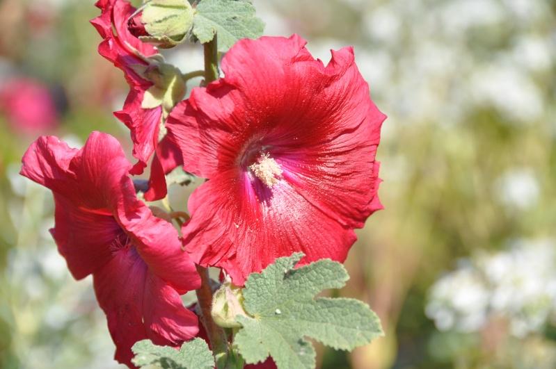 Al-Andalus (Andalousie - Algarve - Alentejo),  faune,  flore, paysages, maisons  et jardins fleuris - Page 2 00916
