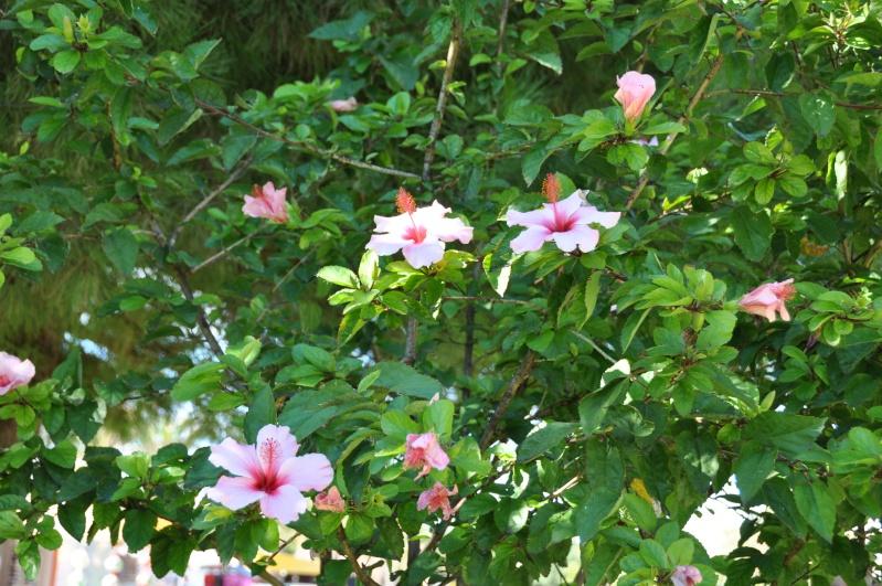 Al-Andalus (Andalousie - Algarve - Alentejo),  faune,  flore, paysages, maisons  et jardins fleuris - Page 2 01015