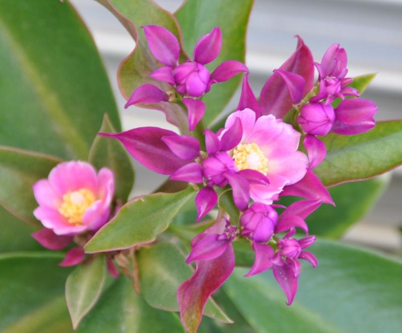 floraisons de chez Xata 01112