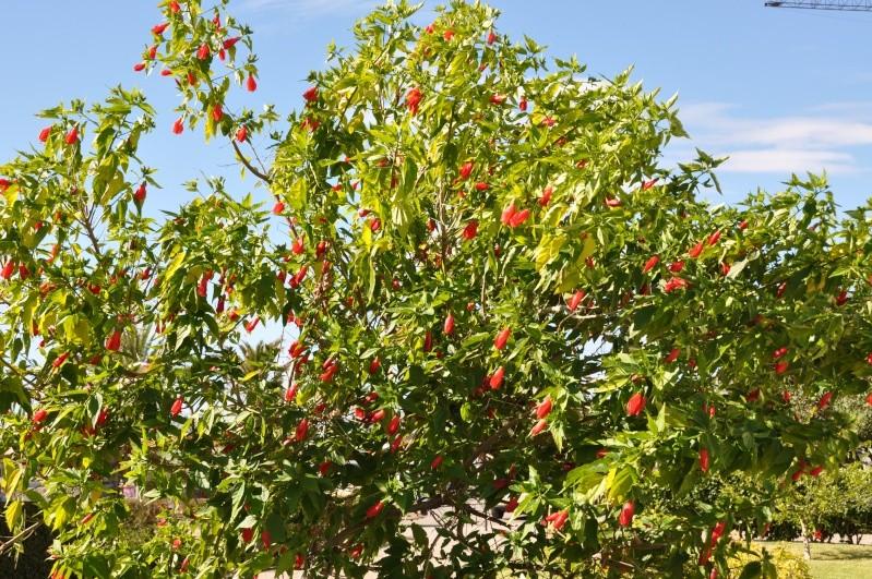 Al-Andalus (Andalousie - Algarve - Alentejo),  faune,  flore, paysages, maisons  et jardins fleuris - Page 2 01117