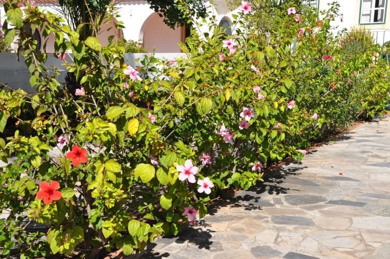 Al-Andalus (Andalousie - Algarve - Alentejo),  faune,  flore, paysages, maisons  et jardins fleuris - Page 2 01610