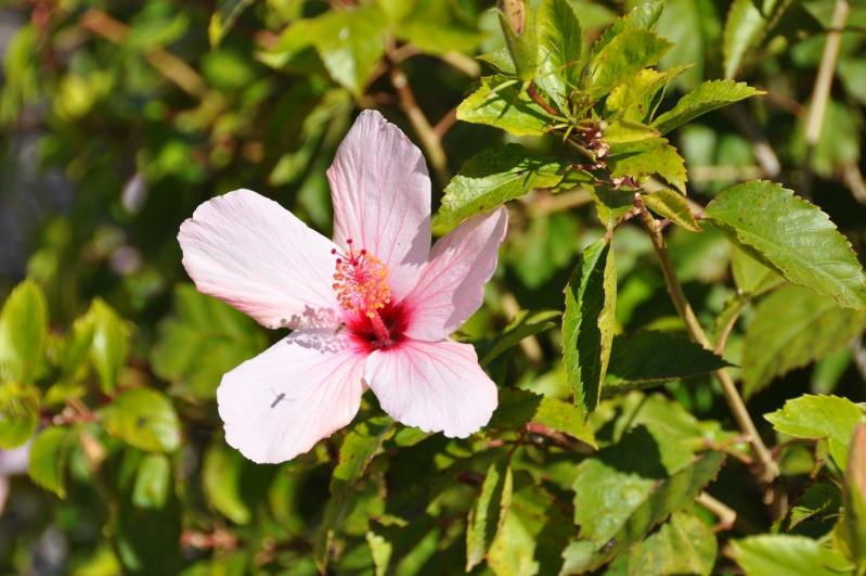 Al-Andalus (Andalousie - Algarve - Alentejo),  faune,  flore, paysages, maisons  et jardins fleuris - Page 2 01714