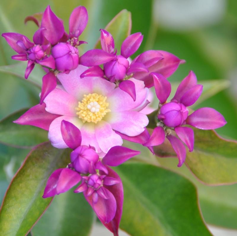 floraisons de chez Xata 02110