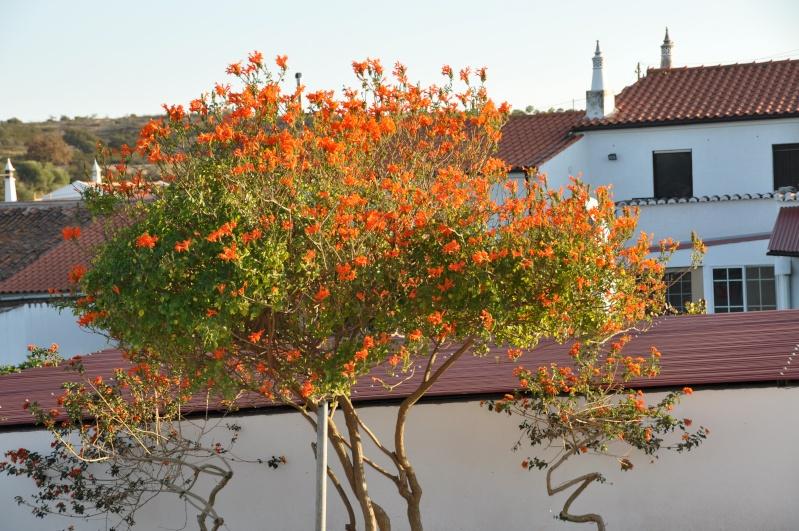Al-Andalus (Andalousie - Algarve - Alentejo),  faune,  flore, paysages, maisons  et jardins fleuris - Page 2 03310