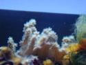 un panel de mes petit invertébrés Dsc00710