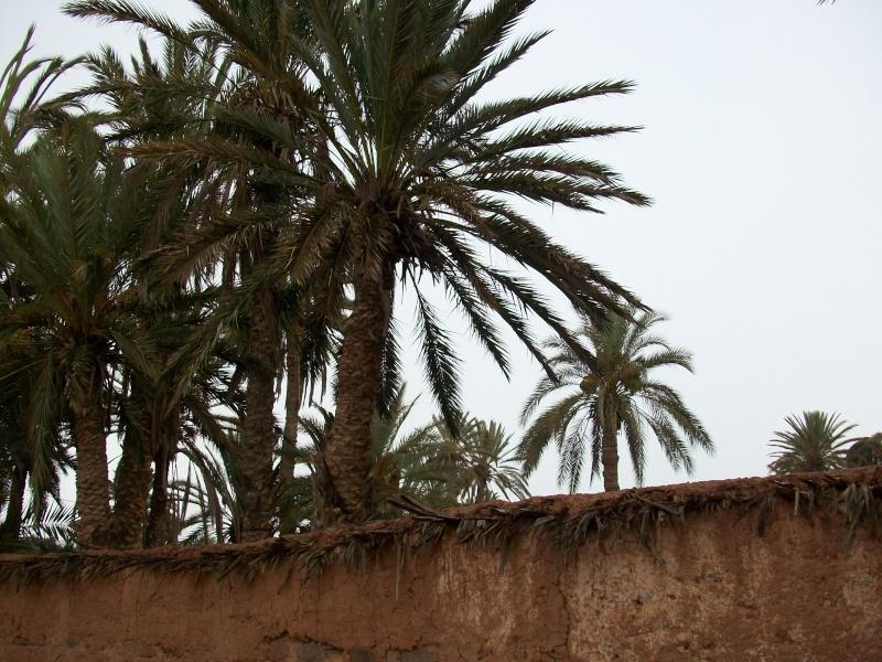 En route vers le sahara, avec ma Mercedes!  - Page 4 100_4314