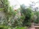 un petit tour au jardin  Jardin12