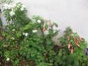 un petit tour au jardin  Jardin13