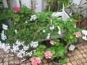 un petit tour au jardin  Jardin14