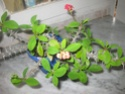 Euphorbia milii var hislopii : splendide ! Zaki_p15