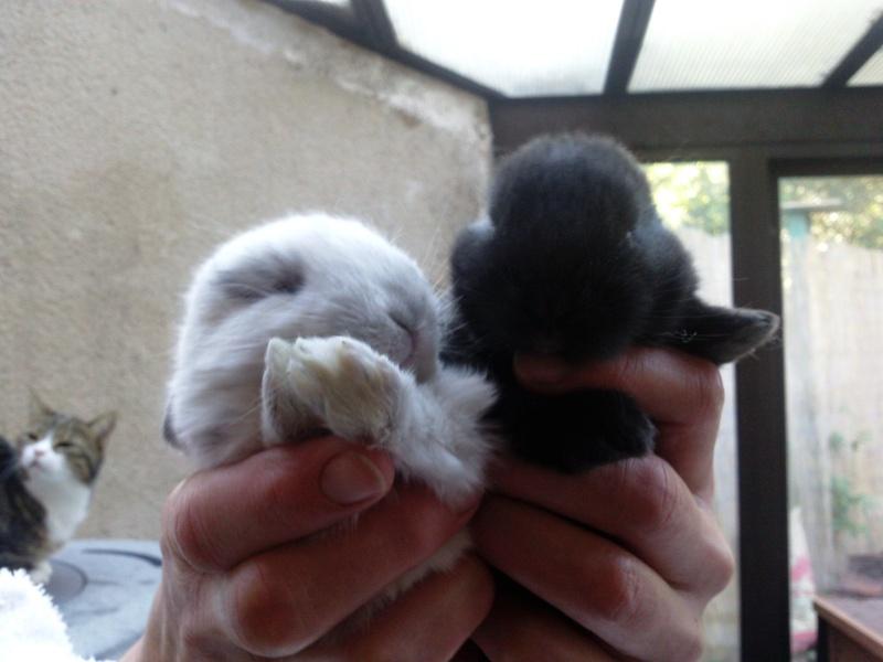 A adopter lapin nain Photo013