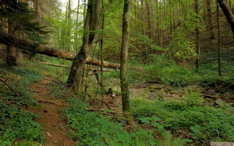 dans la forêt P5106510