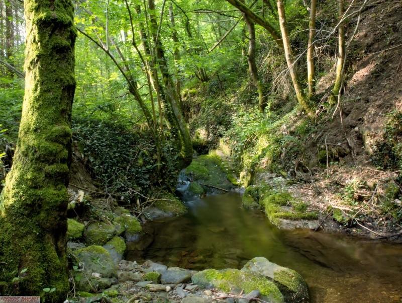 dans la forêt P5106511