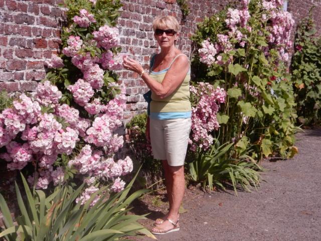 5 juillet : une ou des fleurs Dscn1324