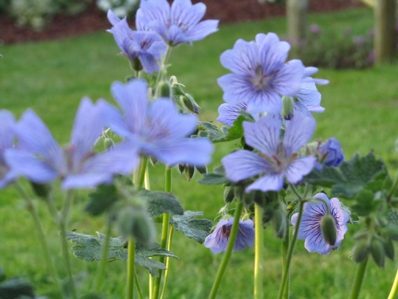 Des floraisons précoces cette années... Img_0210