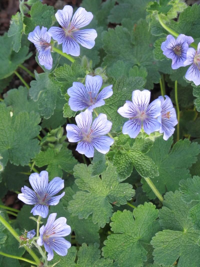 Des floraisons précoces cette années... Img_0211