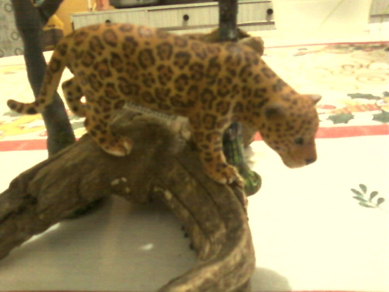 Thank you Roger, the schleich jaguar Foto-033