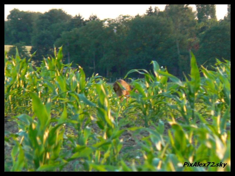 photos faune et flore  P1270110