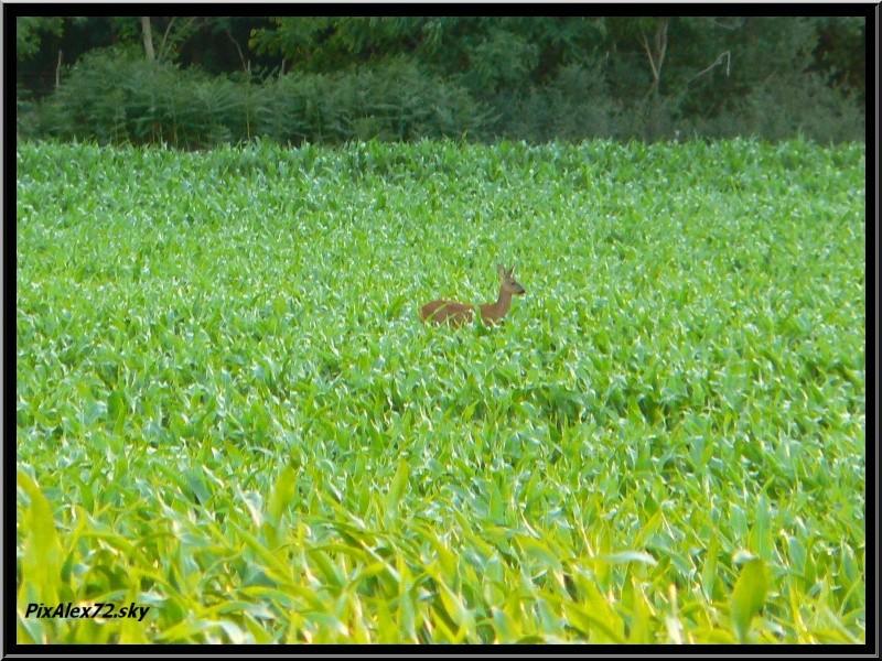 photos faune et flore  P1270111