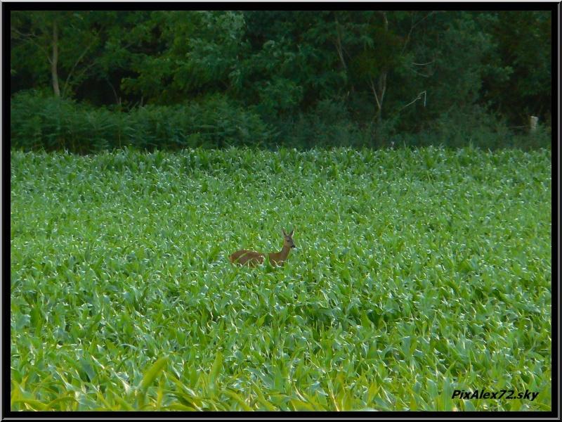 photos faune et flore  P1270112