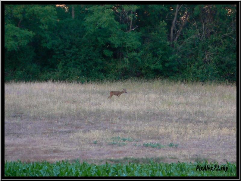 photos faune et flore  P1270113