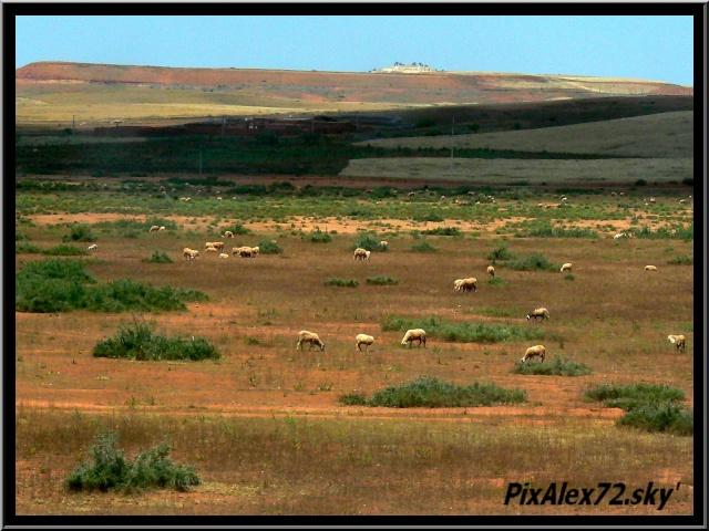 maroc 2011 =D Rep12518