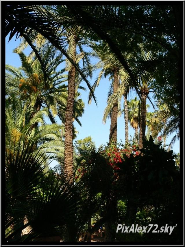 maroc 2011 =D Rep12529
