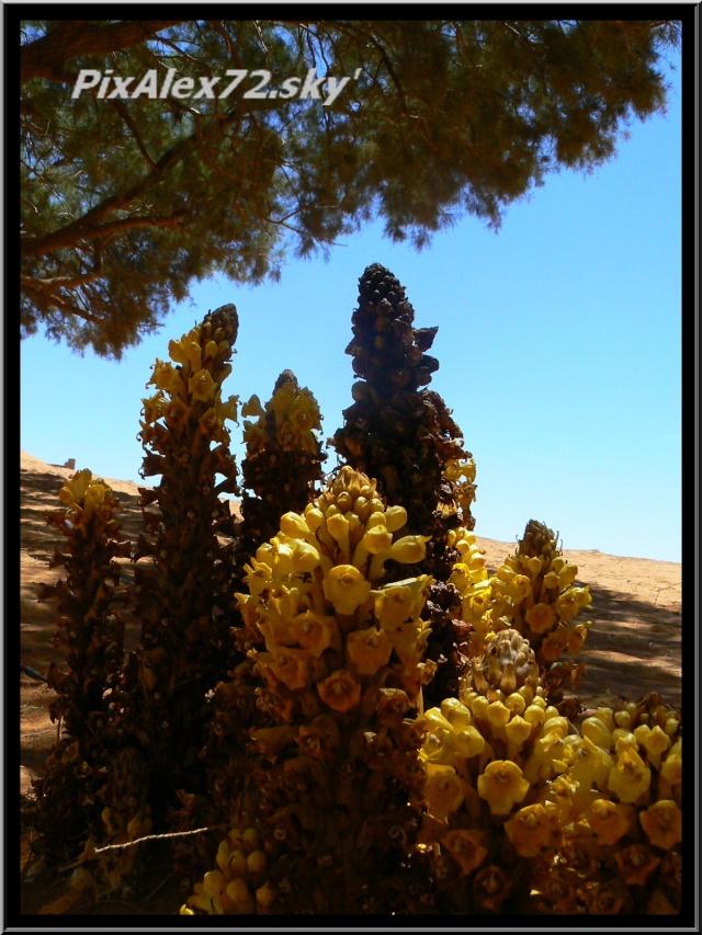 maroc 2011 =D Rep12611