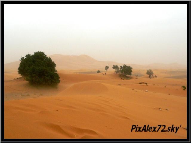 maroc 2011 =D Rep12614