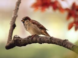 Sve vrste Ptica - Page 3 810