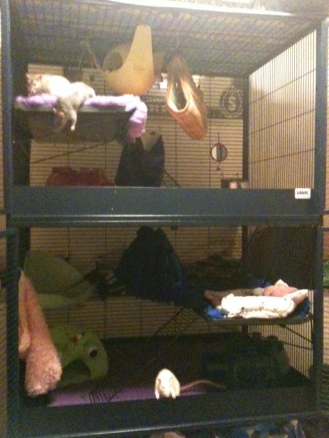 Photos de vos cages - Page 5 Cagess10