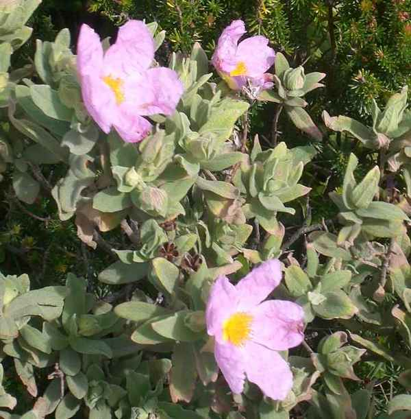 12 - Concours ... Le coeur des fleurs ... avril 2011 - Page 2 Cimg5510