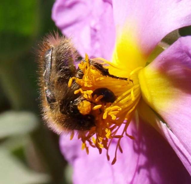12 - Concours ... Le coeur des fleurs ... avril 2011 P4075413