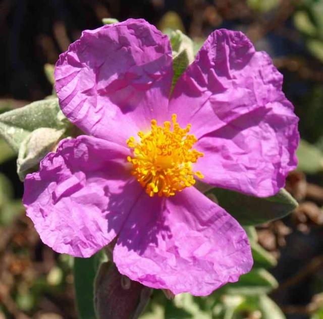 12 - Concours ... Le coeur des fleurs ... avril 2011 P4185910